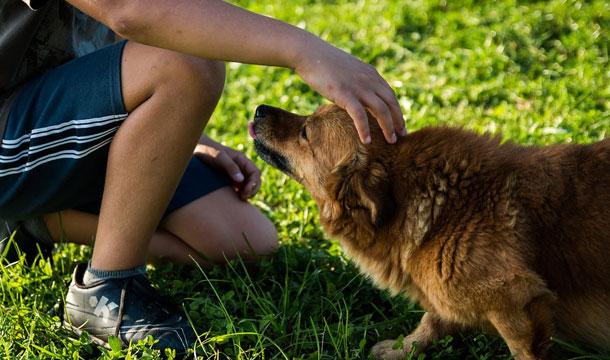 dog petting - Die Grundlagen: 3 Dinge, ohne die Ihr Hund nicht leben kann.