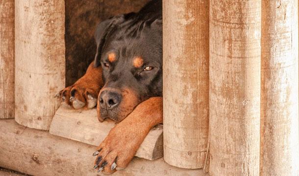 dog shelter - Die Grundlagen: 3 Dinge, ohne die Ihr Hund nicht leben kann.